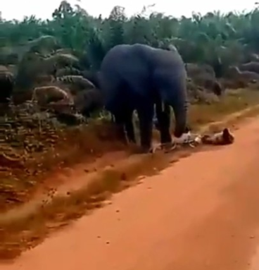 Elephant Attacks Bicycle Rider And Seizes His Bicycle