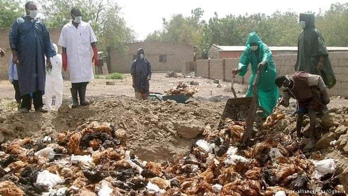, The Ministry of Food and Agriculture announces bird flu outbreak in Ghana;  Greater Accra, Central and Western Regions badly affected, Frederick Nuetei